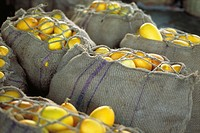 Burlap sacks filled with fresh squash