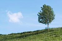 Tree on rural hillside