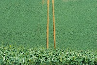 Tire tracks in cultivated field, high angle view