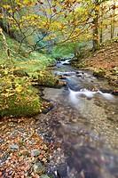 River at autumn, Selva de Irati forest, Navarra, Pyrenees, Spain