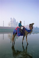 Camel and rider in front of the Taj Mahal and Yamuna Jumna River, Taj Mahal, UNESCO World Heritage Site, Agra, Uttar Pradesh state, India, Asia