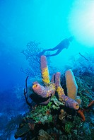 Coral formations and underwater diver, Cozumel Island, Caribbean Sea, Mexico