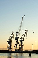 Cranes at Belfast harbor in early morning light