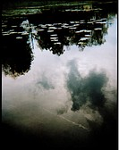 Speglingar I Vatten., Lotus Leaf On Lake With Sky Reflection On Water