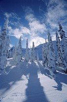 Snow on trees and shadows, Rocky Mountains, Alberta, Canada