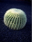 Kaktus, Lanzarote, Spanien, Cactus Plant, Elevated View