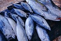 Fish, Seychelles