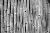 Bamboo, Mustique