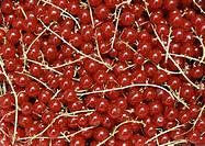 Röda vinbär Berries, Full Frame