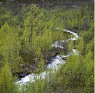 Lappland, Water Flowing Trees, Elevated View