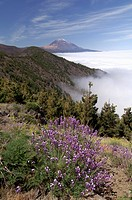 Mount Teide Pico de Teide, Tenerife, Canary Islands, Spain