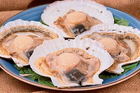 Scallops With Shells (thumbnail)