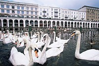 Swans in front of the Alster Arcades in the Altstadt Old Town, Hamburg, Germany, Europe