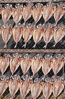 Dried Horse Mackerel