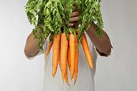 Chef holding bunch of fresh carrots