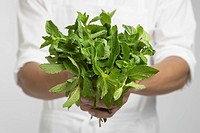 Chef holding bunch of mint mid section