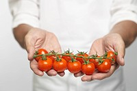 Chef holding tomatoes on vine mid section