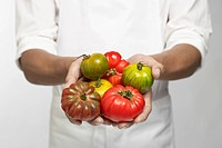 Chef holding tomatoes (mid section)