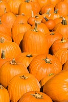 Group of pumpkins at produce market