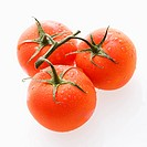 Three wet red ripe tomatoes on vine against white backgroound