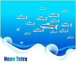 fishes, sea, underwater, undersea, ocean, neon tetra