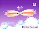 fishes, sea, underwater, undersea, ocean, kissing gourami
