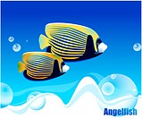 fishes, sea, underwater, undersea, ocean, Angelfish