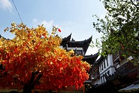 Yuan Garden and wishing tree, Shanghai (thumbnail)