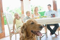 Family having breakfast with Golden Retriever in the Foreground, selective focus