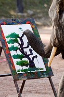 Elephant painting, Chiang Mai, Thailand, Southeast Asia, Asia