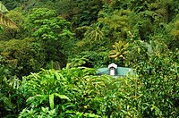 10851125, Dominica, Roseau, Gardens, Papillote Wil