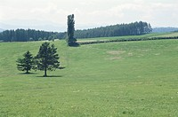 A Meadow And A Tree