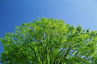 A Fresh Green Tree