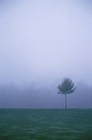 Fog And A Tree In Germany