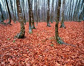 Fallen Autumn Leaves In Forest