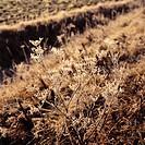 60X60 FOTO: Per B Adolphson COPYRIGHT BILDHUSET, Plant In Field