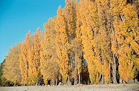 Trees Turning Yellow