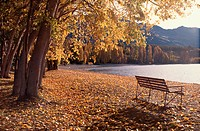 Bench By Lake In Autumn