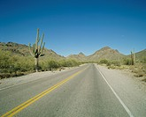 A Road And A Cactus