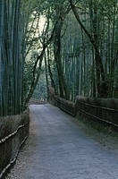 A Bamboo Path
