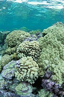 The Coral Group In Tahiti