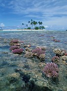 The Coral Reef Of Ebb Tide