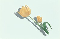 The Tulip Of Two Yellow