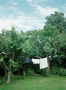 Tvätt På Tork Ute, Laundry Hanging Between Trees