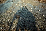 Shadow of riding elefant in stony river bed, Corbett National park, North India