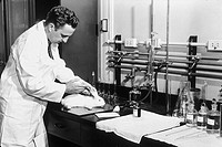 Howard Skipper 1915_2006, US oncologist, injecting a laboratory rabbit Oryctolagus cuniculus. Skipper´s investigation of the nature of cancer using la...