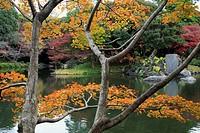 Japan, Tokyo, Korakuen Garden