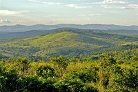 Lanscape of the Kibale forest in Uganda, Africa.