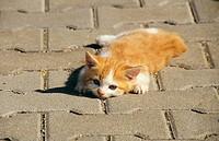 kitten _ lying