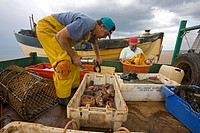 FISHING BOAT landing with catch. Weybourne Norfolk